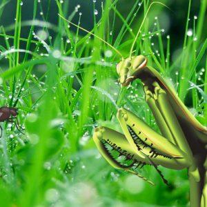 """Exercice, Animation flash avec des insectes dans des photos de nature, """"Minuscules"""" m'a piqué l'idée."""